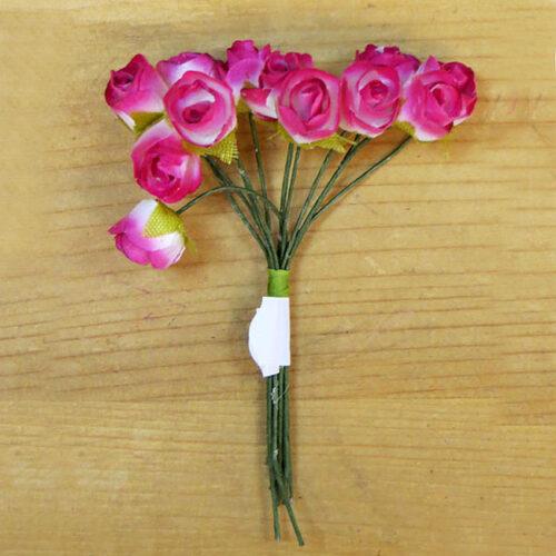 Τριαντάφυλλα-μινιατούρα φούξια